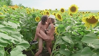 Indian Style Pose On Sunflower Field